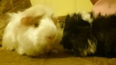 Missy Piggy and Tinkerbell
