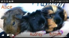Alice, Audrey, Buttons
