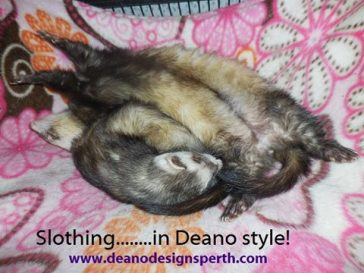 Slothing in Style