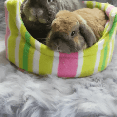 Squishy Bed